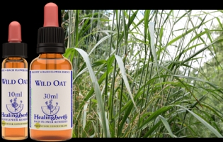 Wild oat 10 ml (bach)