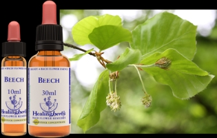 Beech 10 ml (bach)