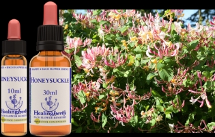 Honeysuckle 10 ml (bach)