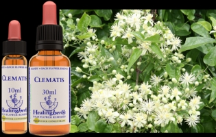 Clematis 10 ml (bach)