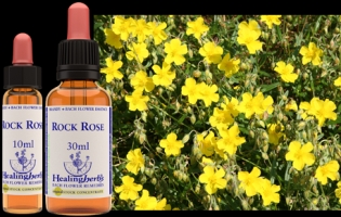 Rock rose 10 ml (bach)