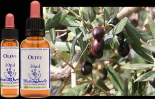 Olive 10 ml (bach)